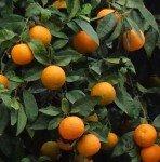 Sommaire  oranger-148x150