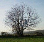 Le-bel-arbre-de-Gandrange-150x144
