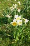 Fin de printemps Fives-160312-41-100x150